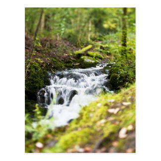 Forest Stream Postcard