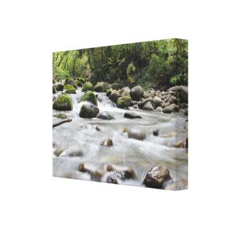 Forest Stream wrapped canvas