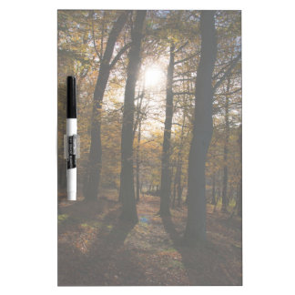 Forest sun Dry-Erase board