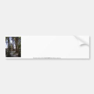 Forest Sun Rays in the Snow 32 Bumper Sticker