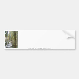 Forest Sun Rays in the Snow 54 Bumper Stickers