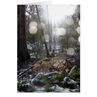 Forest Sun Rays in the Snow # 68 Card
