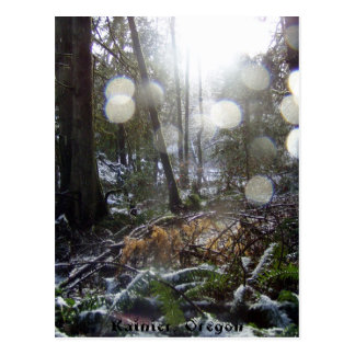 Forest Sun Rays in the Snow # 68 Postcard