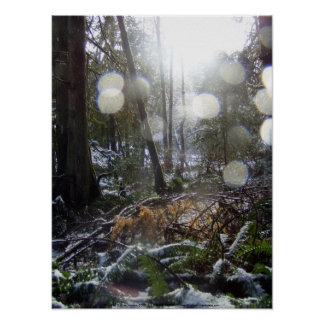 Forest Sun Rays in the Snow #68 Poster