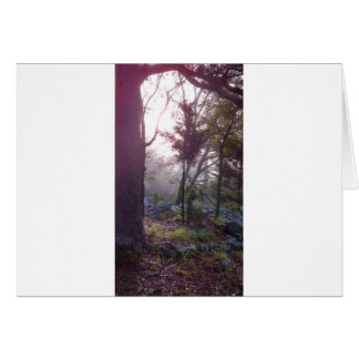 Forest Sunrise Cards