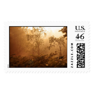 Forest Sunrise H Stamps