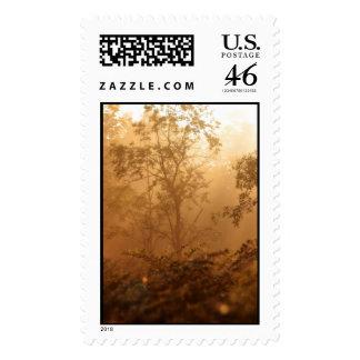 Forest Sunrise V Postage