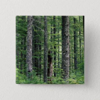 Forest Symmetry Pinback Button