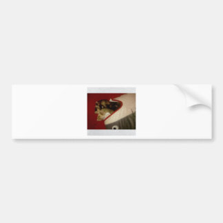 Forest the Ferret and Bandit the Ferret Sleeping Car Bumper Sticker