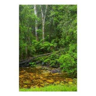 Forest, The Knysna-Amatole Montane Forests Poster