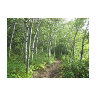 Forest Trail Gallery Wrap Canvas