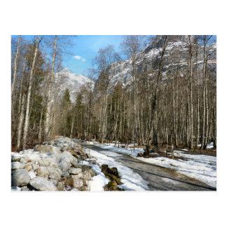 Forest trail, Grindelwald Grund Postcard