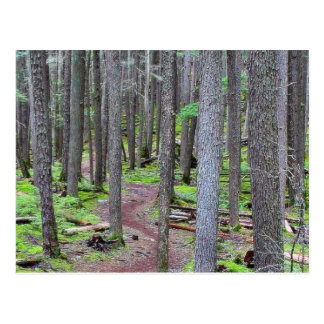 Forest Trail Postcard