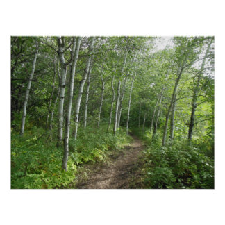 Forest Trail Poster