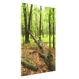 Forest tree trunk Stretched Canvas Print
