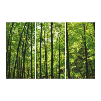 Forest Trees Backdrop Canvas Print