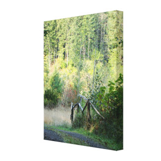 Forest Trees Redwoods Hiking Trail Scenic Oregon Canvas Print