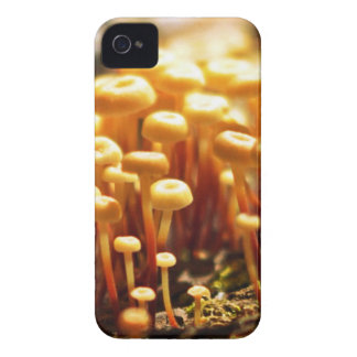 Forest Trifles iPhone Case