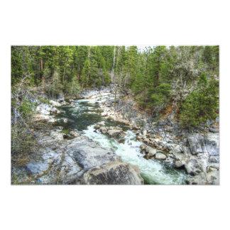 Forest Vein Photo Print