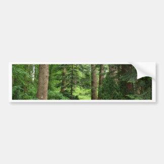 Forest walk, highlands, Scotland Bumper Sticker