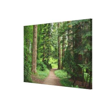 franwestphotography Forest walk, highlands, Scotland Canvas Print