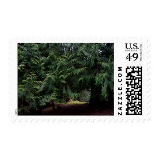 Forest Walk Postage Stamp