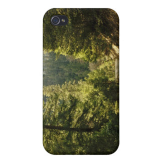 Forest Walking Path iPhone 4/4S Cases