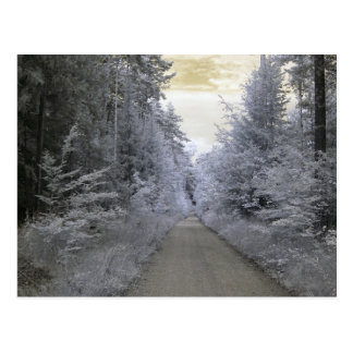 Forest Way, infrared photography Postcard