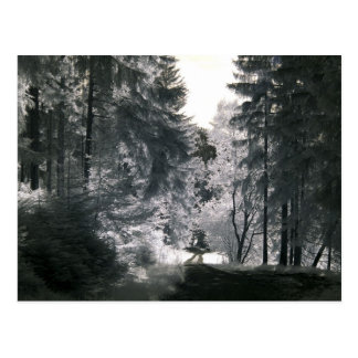 Forest Way/Infrared Photography Postcard
