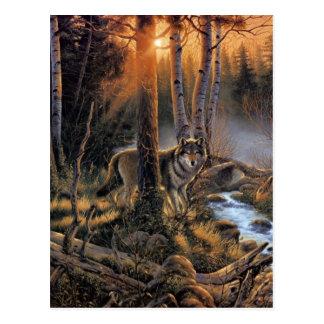 Forest Wolf Postcard