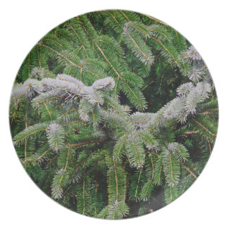 Forest Woods Meadow Ferns Oregon Trail Photography Plate