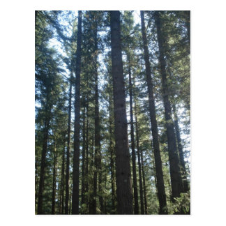 Forestry Post Cards