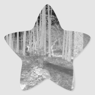 Forests of Ardentiny Star Stickers