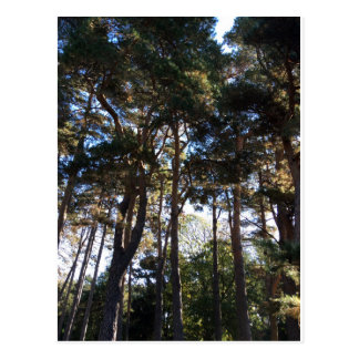 Forests Postcard
