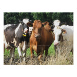 Forever Friends Cow Poster Gift