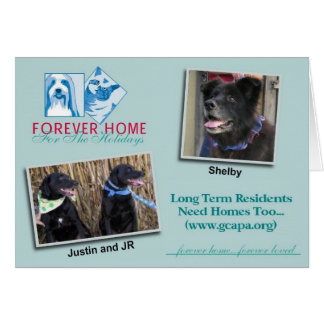 Forever Home for the Holidays Cards