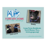 Forever Home for the Holidays Greeting Card Postcard