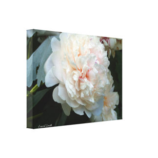 Forever Peony Canvas Print