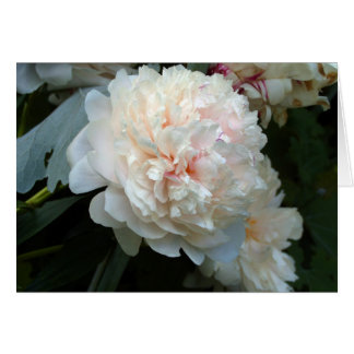Forever Peony Card