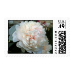 Forever Peony Postage Stamps