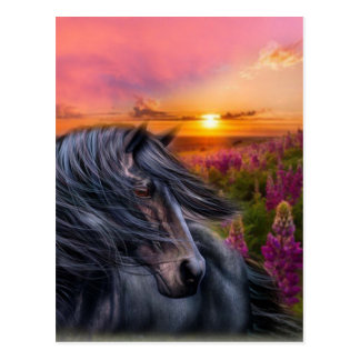 Forever Wild Black Horse Postcard