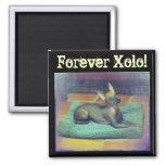 Forever Xolo! Magnet