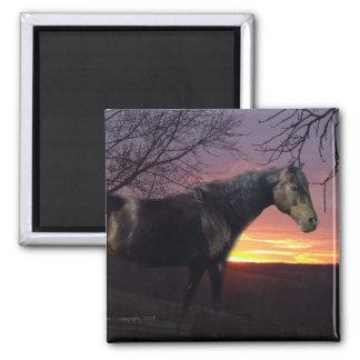 ForeverMorgans Black Horse in Purple Sunrise Magnet
