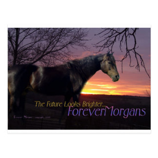 ForeverMorgans Bright Future Morgan Horse Postcard