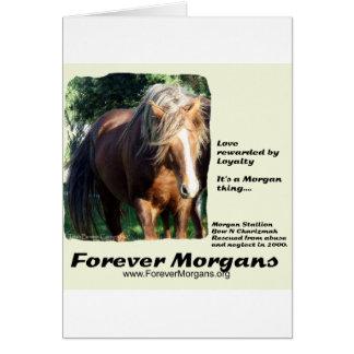 ForeverMorgans Morgan Stallion Card