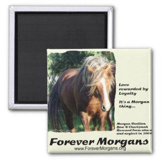 ForeverMorgans Morgan Stallion Fridge Magnets