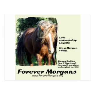 ForeverMorgans Morgan Stallion Postcard