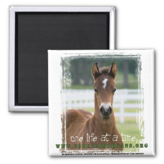 ForeverMorgans One Life at a Time Foal 2 Inch Square Magnet