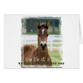 ForeverMorgans One Life at a Time Foal Card