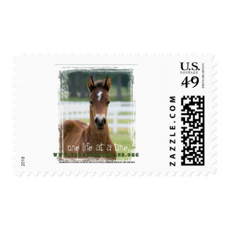 ForeverMorgans One Life at a Time Foal Postage